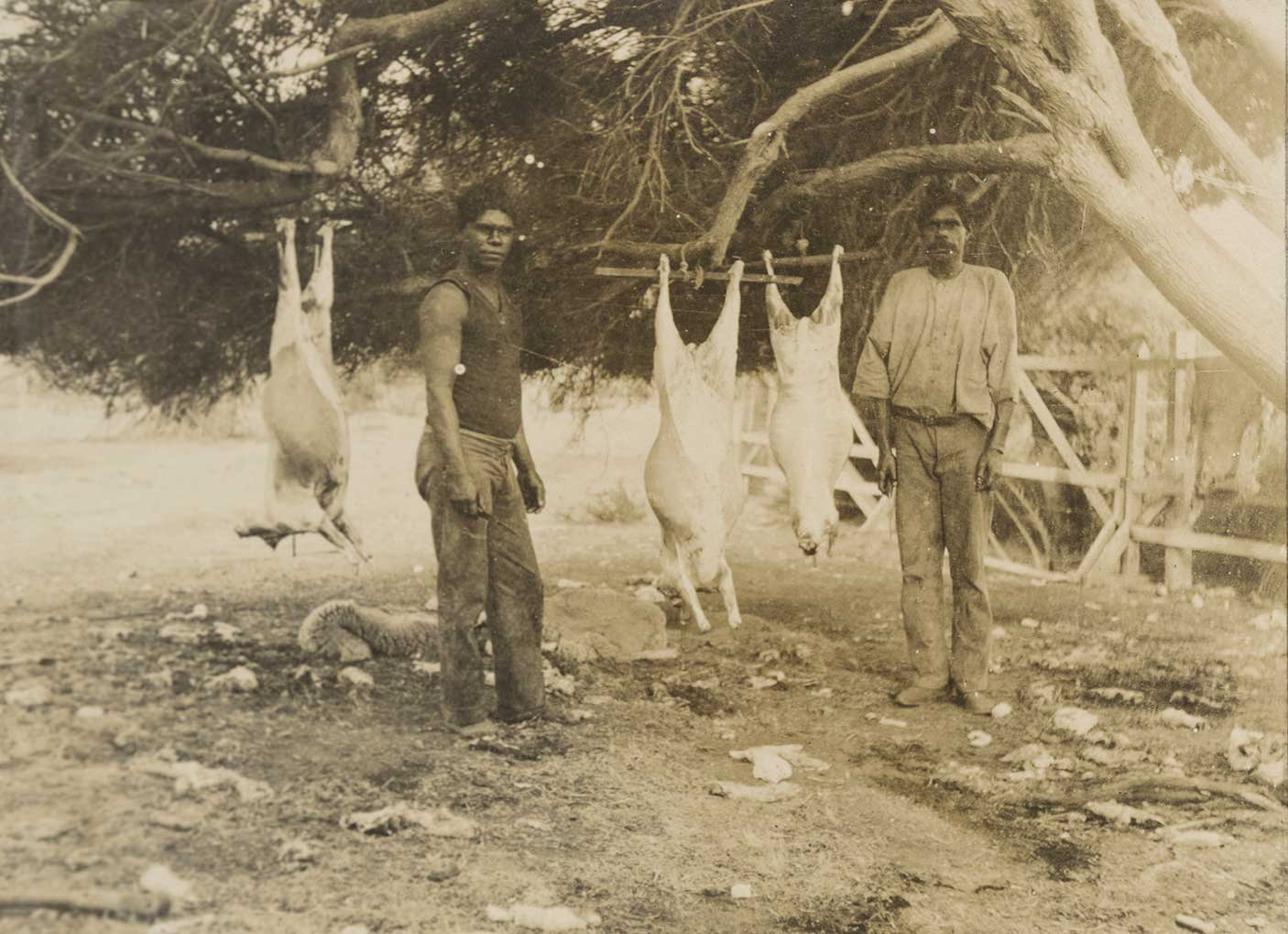 Two Aboriginal men preparing sheep on Wadjemup, c. 1915