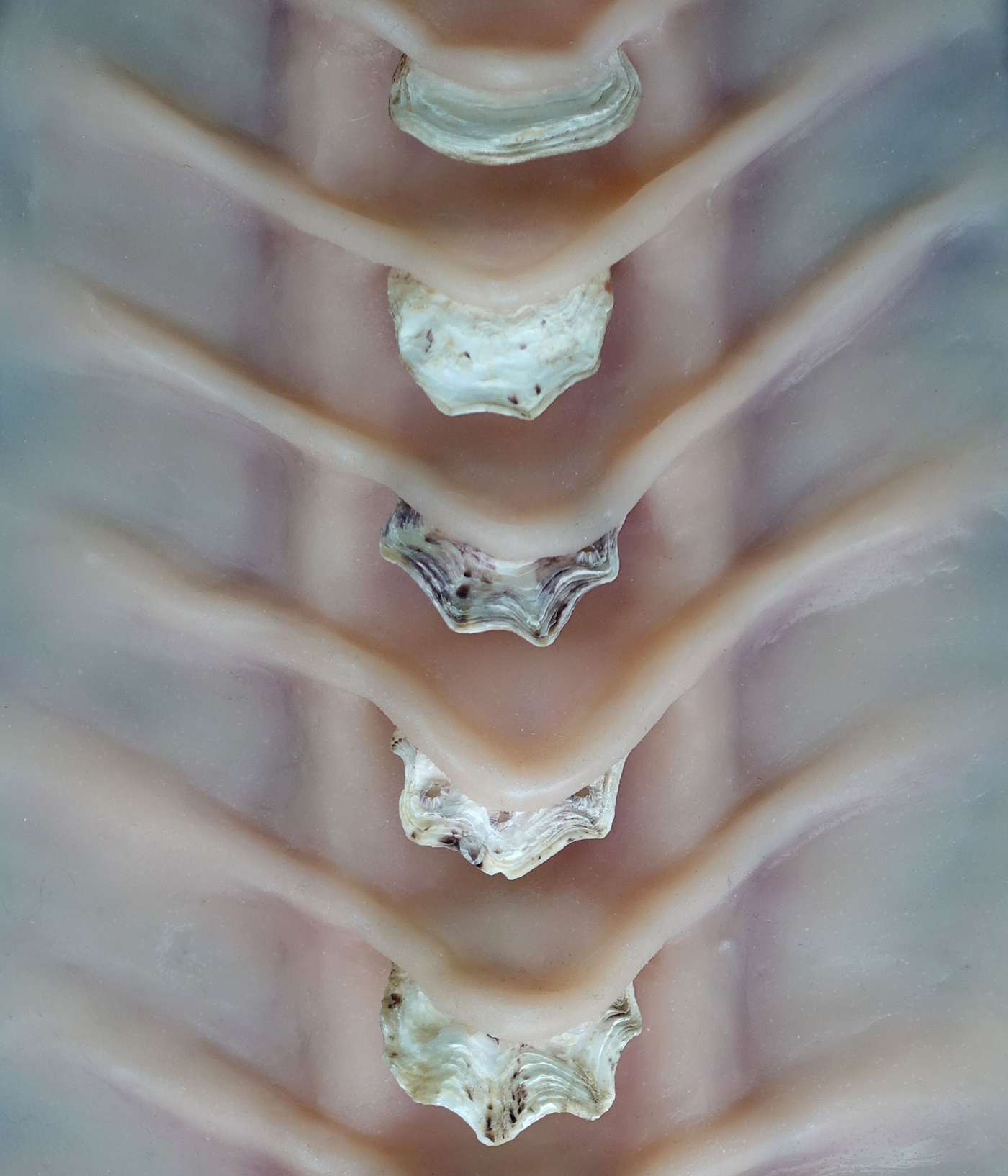 Detail of Zoonoisis, Erin Coates, 2020, sculptural prop made of silicon and oystershell.