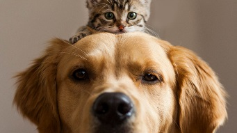 A cat sitting on top of a dog's head